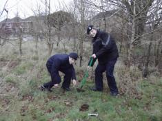 PLANTING TREES AT SEAFIELD PARK  FEB 2012