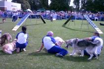 Stubbington Fayre  Dogs arena         AUGUST 2011 046